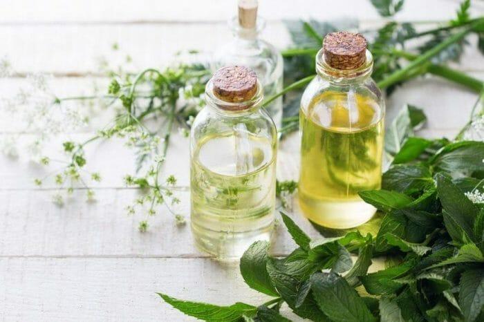 Ekstrakty roślinne w kosmetyce, właściwości i zastosowanie
